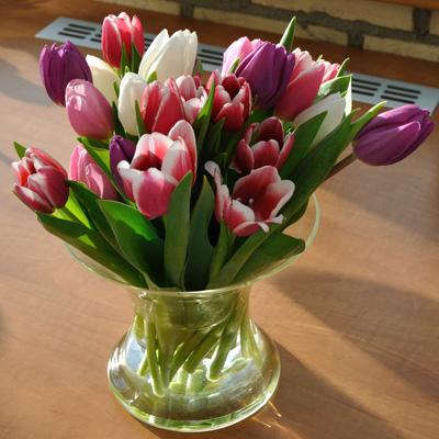 eerste tulpen / first tulips 2011