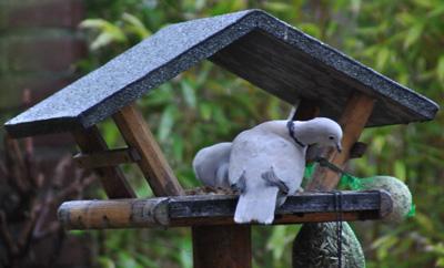 vogeltelling resultaten – bird counting results