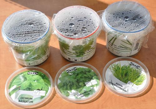 Ikea kruiden / herbs