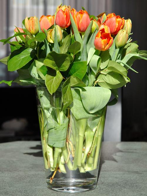 Laatste tulpen – Last tulips