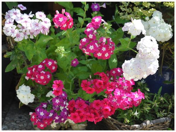 Tuin nieuws – Garden news